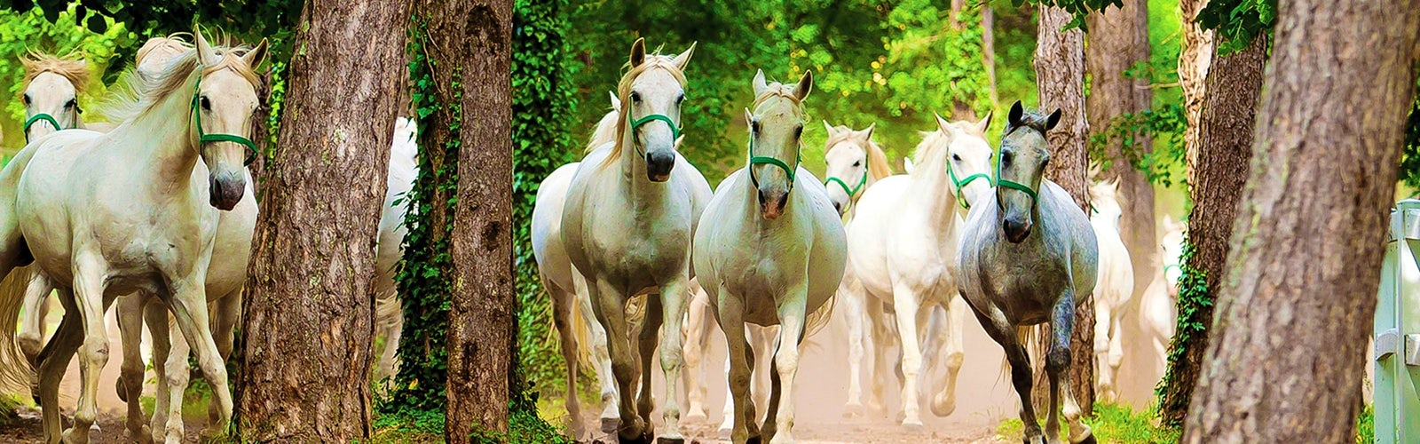 The Beauty and… the Horse: Lipica